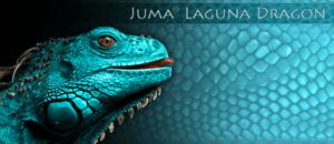 Juma Laguna Dragon