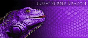 Juma Purple Dragon